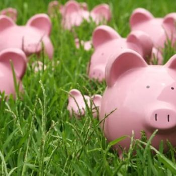 Piggy banks in a field